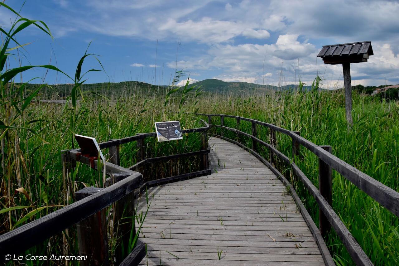 L'étang de Tanchiccia