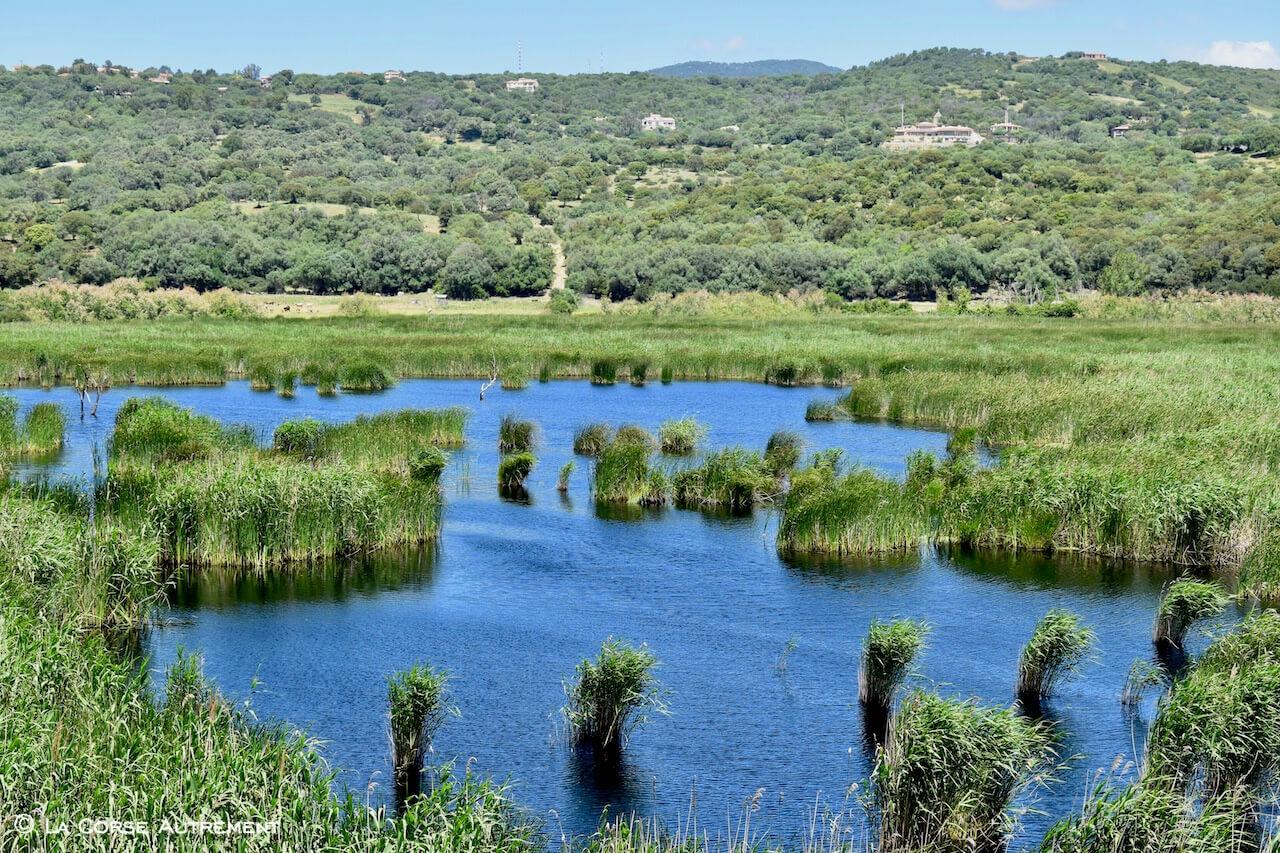 L'étang de Tanchiccia, Serra di Ferro