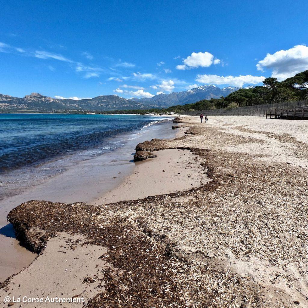 Calvi plage pinède