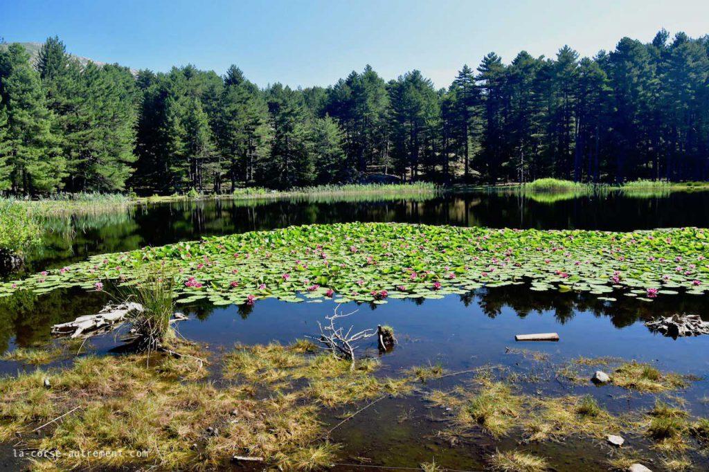 Randonnée vers le lac de Creno